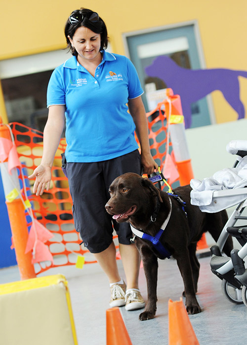 Brown Labrador Seeing Eye Dog wearing harness is being guided by instructor.