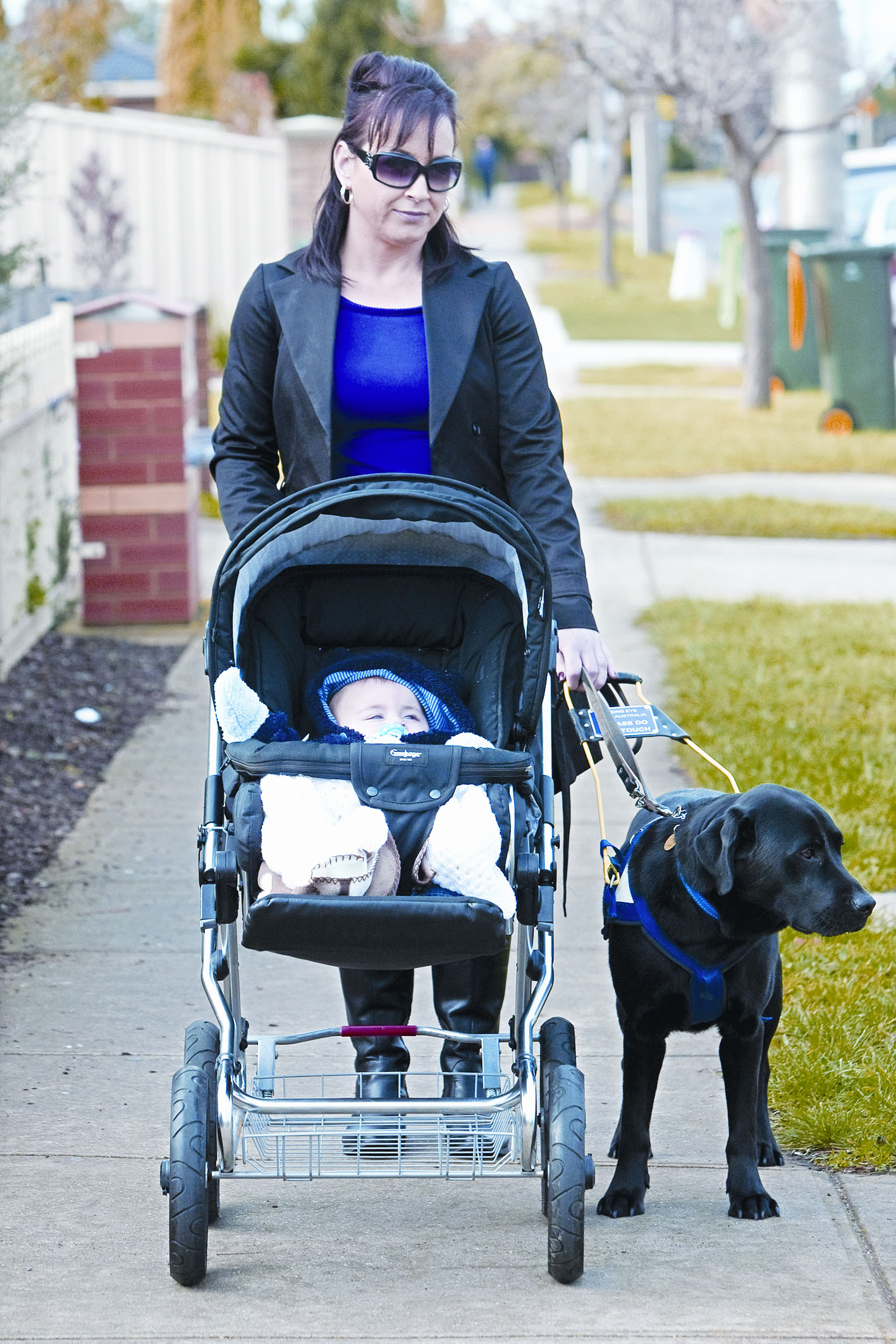 Woman is walking with her seeing eye dog whilst pushing her baby in the pram